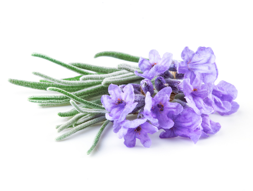 Lavender can be paired with dishes both savory and sweet.