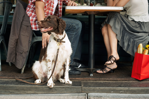 Service dogs should be allowed in restaurants, even though health and sanitation laws usually warn against animals in areas with food preparation.